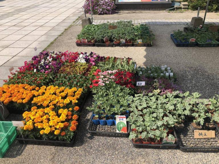 花と苗物市