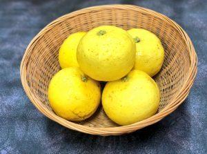 幻の柑橘類「げんこう」を使用した商品のご紹介です!
