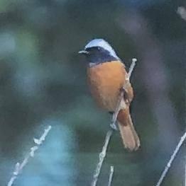 唐津の野鳥写真展の開催について